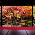 PENTAX PENTAX K-5で撮影した風景(秋色圓光寺)の写真(画像)