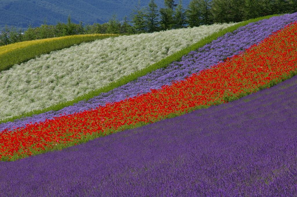 想い出の北海道4(2006/7)
