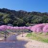 春の光を存分に(2010/2撮影)