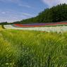 PENTAX PENTAX *ist DSで撮影した風景(想い出の北海道1(2006/7)再UP版)の写真(画像)