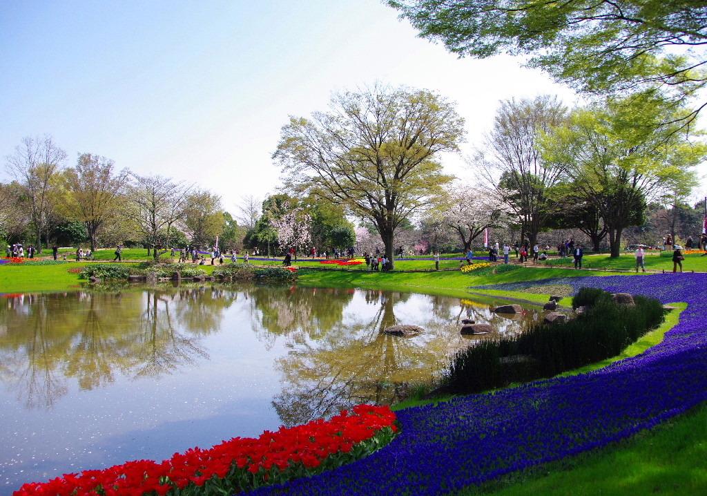 昭和記念公園2008.4