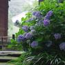 PENTAX PENTAX K-7で撮影した植物(惜別)の写真(画像)