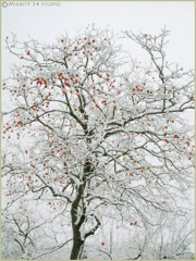 08.12.28雪