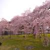 京都最大の