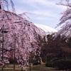 ドームと桜