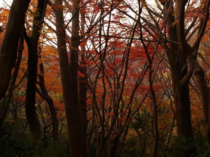 静寂な谷の紅葉