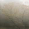霧に煙る淡い紅葉