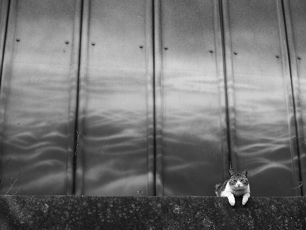 猫日和:じ~~っ 人間観察