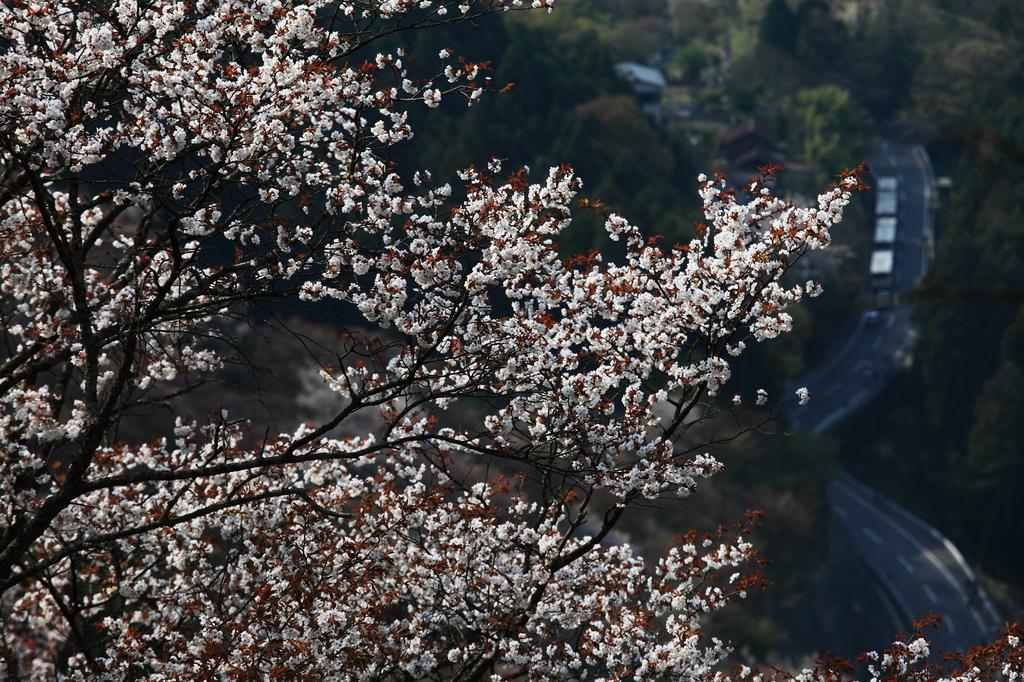 吉野のお山