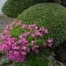 CANON Canon EOS 20Dで撮影した植物(ボーダーレス)の写真(画像)