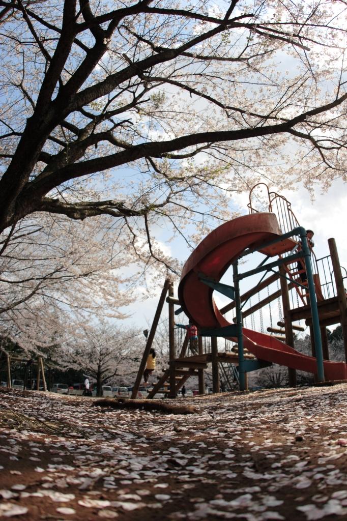 桜とすべり台