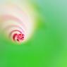 CANON Canon EOS 20Dで撮影した植物(うず)の写真(画像)