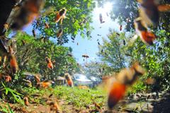 台風一過のミツバチ