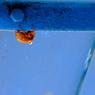 CANON Canon EOS 20Dで撮影した動物(空のように青い滑り台の下で)の写真(画像)