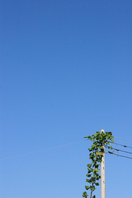 空まで伸びたい