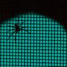 CANON Canon EOS 20Dで撮影したインテリア・オブジェクト(spider : green)の写真(画像)