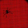 CANON Canon EOS 20Dで撮影したインテリア・オブジェクト(spider : red)の写真(画像)
