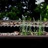 CANON Canon EOS 20Dで撮影した植物(お日様に近づいてみた)の写真(画像)