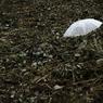 CANON Canon EOS 20Dで撮影したインテリア・オブジェクト(plastic umbrella)の写真(画像)
