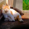 三崎港の猫たち 02