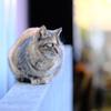 三崎港の猫たち 01