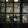 洋裁店の窓