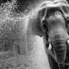 象の水浴び 02