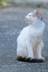 港町の猫さん ツンデレ編