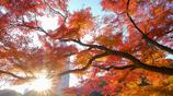 秋、華やかに