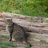 Cat in the garden 4
