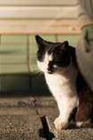 陽だまりの猫 02