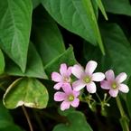 NIKON NIKON D40で撮影した植物(日比谷公園にて)の写真(画像)