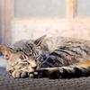 寿司屋の猫 02