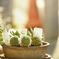 サボテンと太陽のサラダ