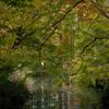 秋の森の奥に