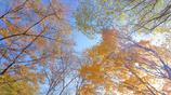 秋、集合!