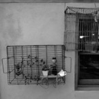 NIKON COOLPIX P300で撮影した風景(Pinoccio)の写真(画像)