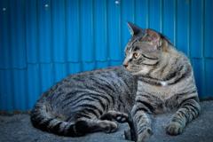 Cat in Blue 02
