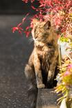 陽だまりの猫 03