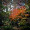 秋の森の奥に 02