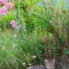 Cat in the garden 2