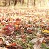 秋の森のカーペット