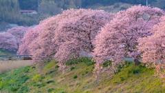 春の日のおわりに 02