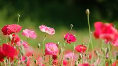花畑のお姫様