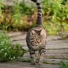 Cat in the garden 3