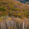 小田代原の秋