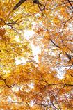 秋というフレーム
