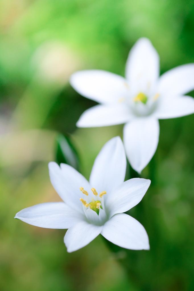 小さな小さな春 02