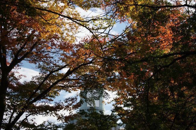 勝山公園の秋