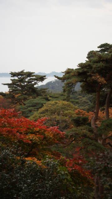 晩秋の松島3